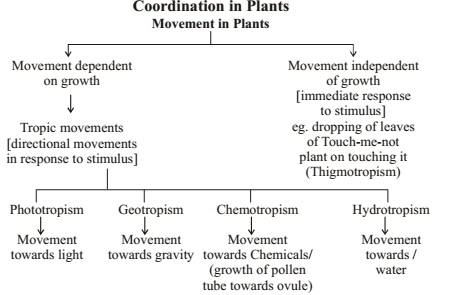 COORDINATION IN PLANTS