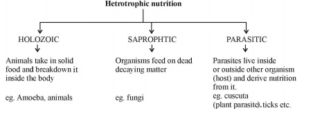 Hetrotrophic Nutrition