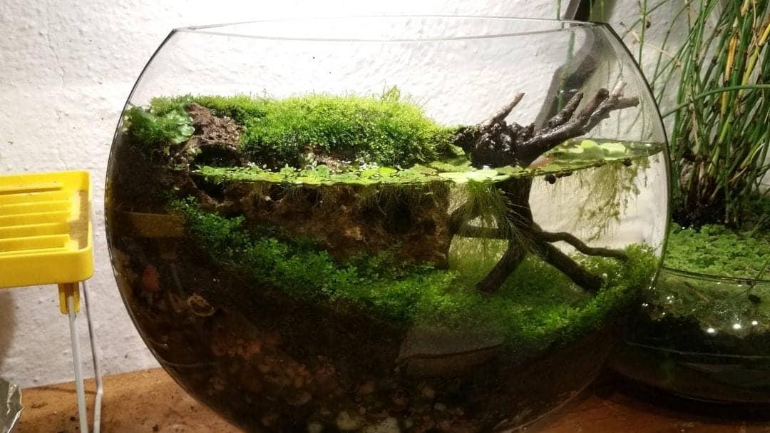Self Sustaining Ecosystem Jarrarium Maintenance Self