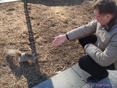 Squirrels Of Washington