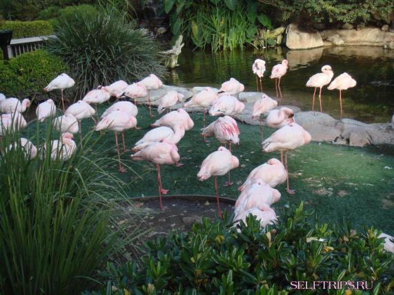 Flamingo. SeaWorld. San Diego
