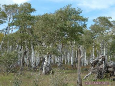 Национальный парк Зайон