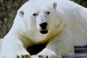 Sakhalin Zoological and Botanical Park
