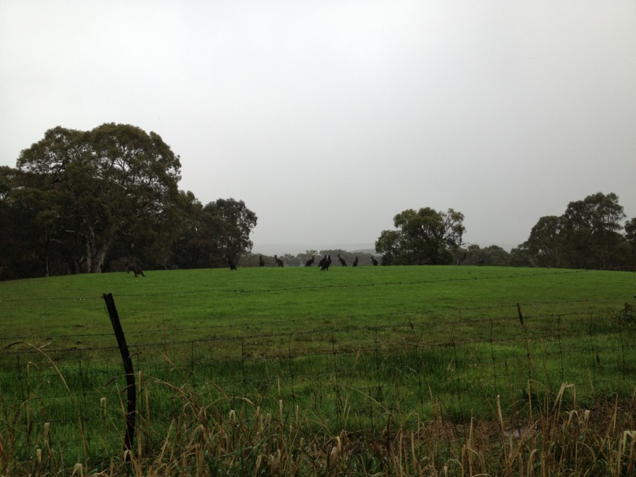 Кубер-Педи, Австралия