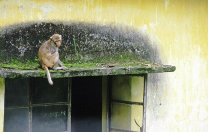 Monkey on window