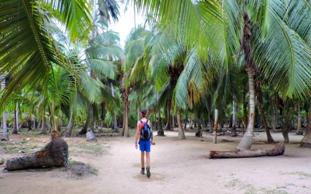 Tayrona National Park Jungle