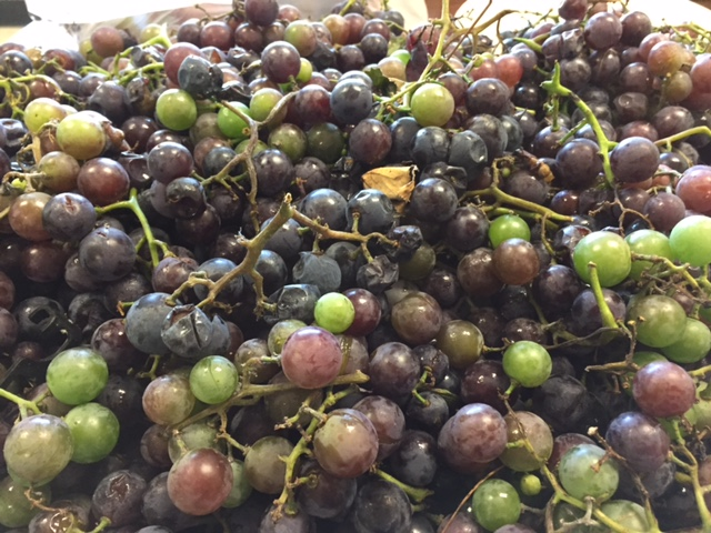photo of food pantry donation garden fresh grapes