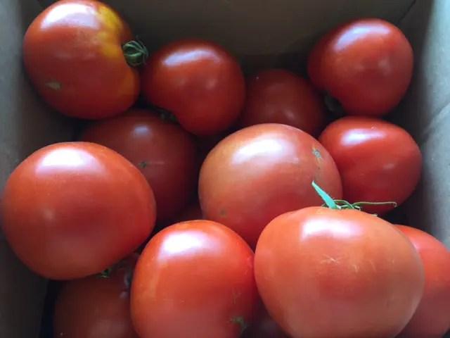 photo of food pantry garden fresh tomatoes