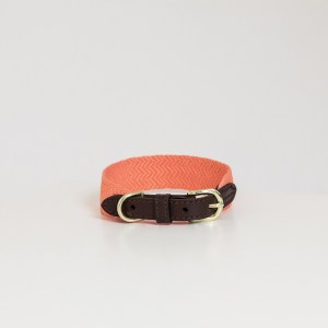 Collier Jacquard Orange Kentucky Horsewear Dogwear