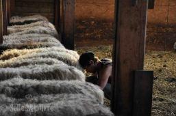 la grange à ludo-79