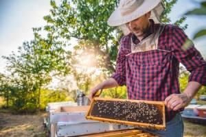 Inspired Homes Hobby-Farm-Bees-300x200 Hobby Farms Lifestyle  Hobby Farm