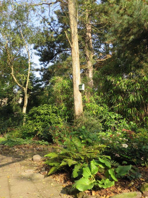 Foto van een nóg groenere tuin na deelname aan Operatie Steenbreek.