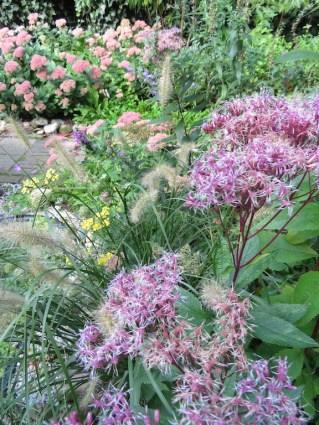 19 september 2018: mijn favoriet is nu het rijkbloeiende Leverkruid met z'n mooie donkere stengels. Een eldorado voor insecten.