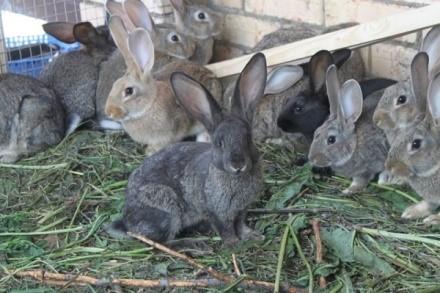 Бизнес план мини фермы по разведению кроликов