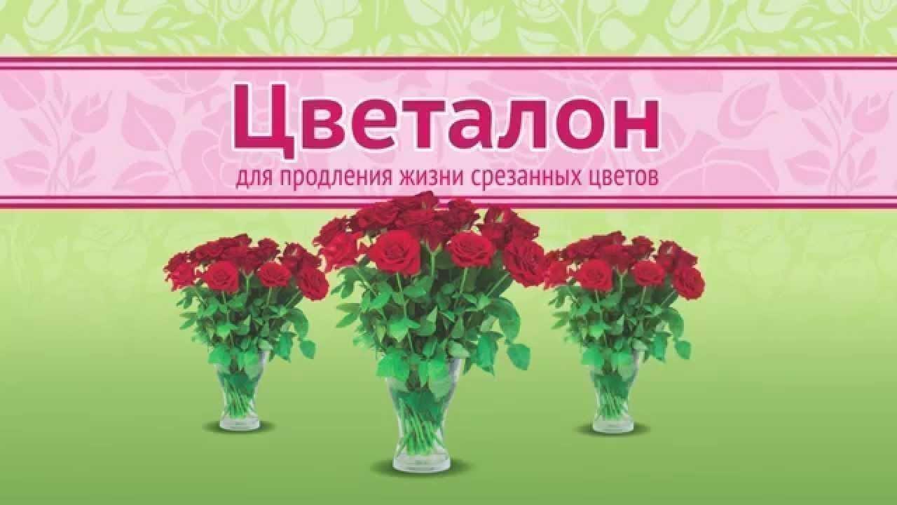 Как сохранить срезанные хризантемы в вазе надолго в какую воду ставить уход оживление