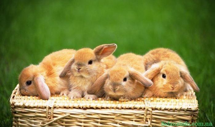 Незаразные болезни кроликов и их лечение