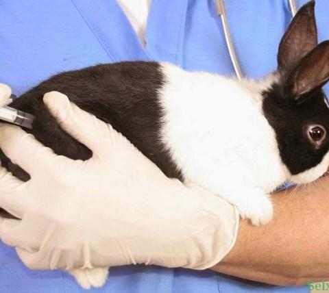 Что делать при вздутии живота у кроликов