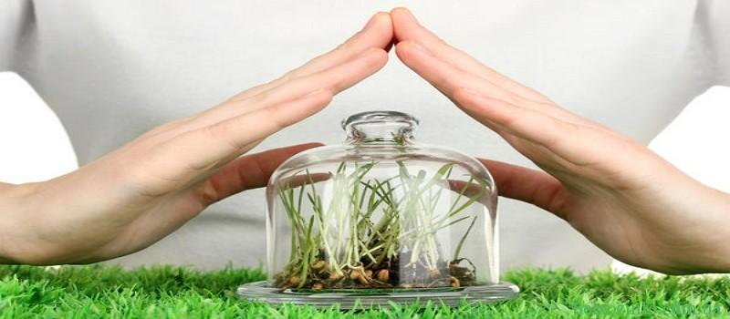 Як захистити рослини від шкідників та хвороб