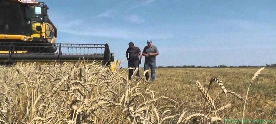 Как максимально эффективно провести сбор урожая