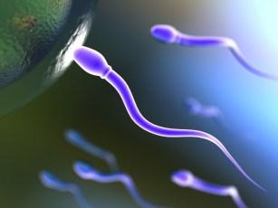 union ovulo espermatozoide