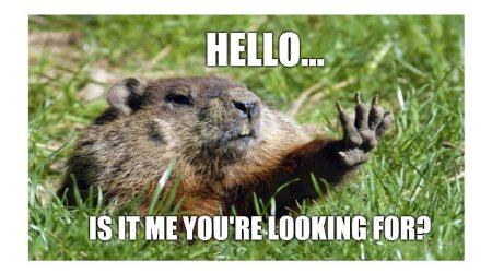 Zmiana algorytmu Google Świstak - Groundhog