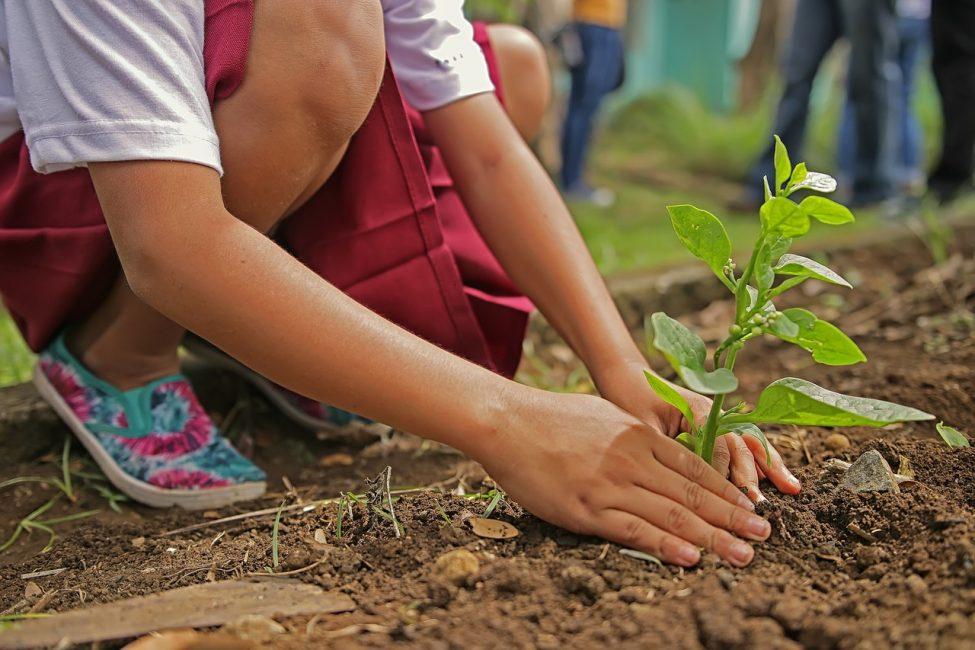 Niña plantando árbol