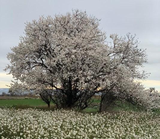 Primavera adelantada agenda planes