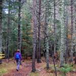 10 actividades para hacer en familia en otoño