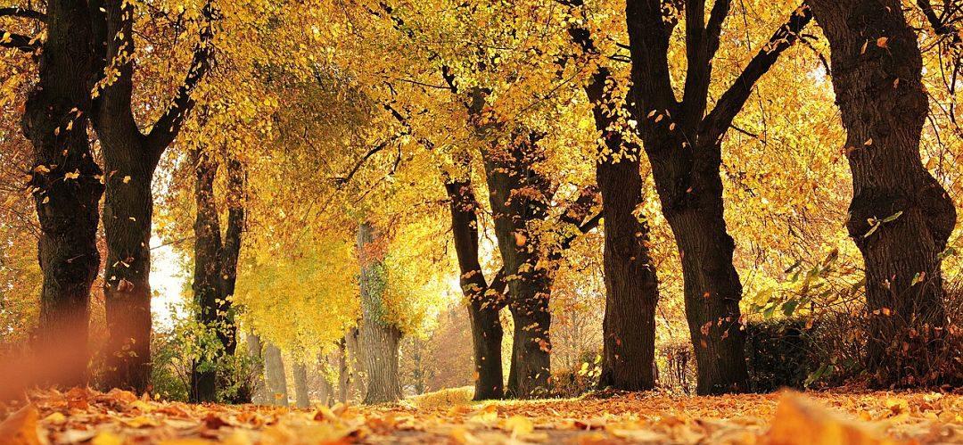 otoño diferente con niños