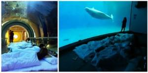 semestafakta- National Museum of Marine Biology & Aquarium 2
