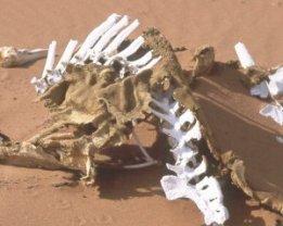 semestafakta- Horse Burial site in Swakopmund2