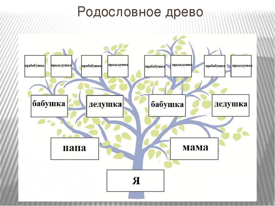 Семейное древо семьи: 4 вида, как составить родовое дерево красиво и правильно