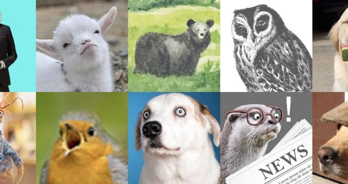 twitter avatars