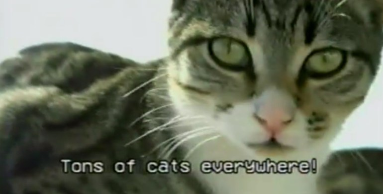 screen capture from CATS! A Travel Music Video
