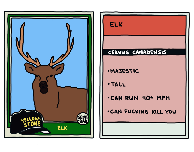 drawing of a yellowstone elk that can kill you