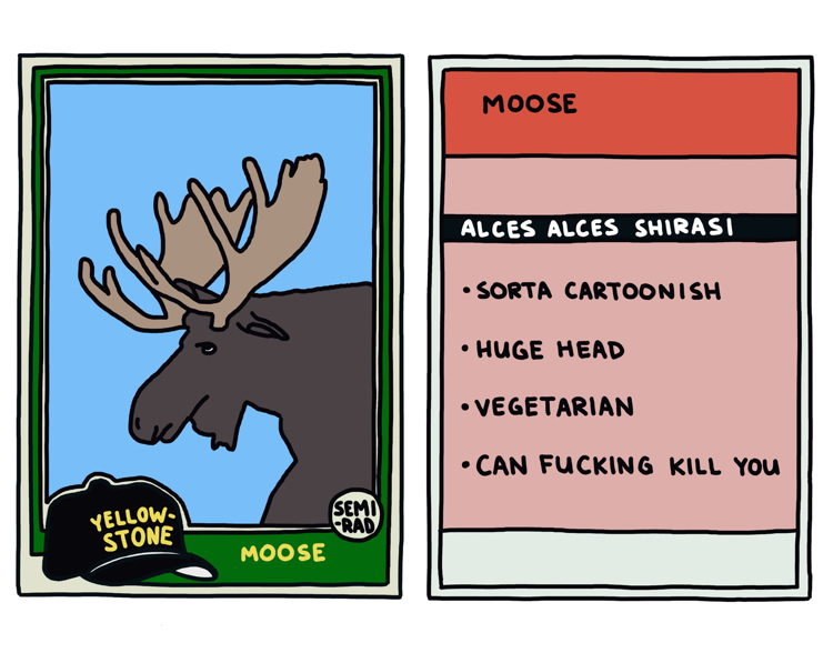 drawing of a yellowstone moose that can kill you