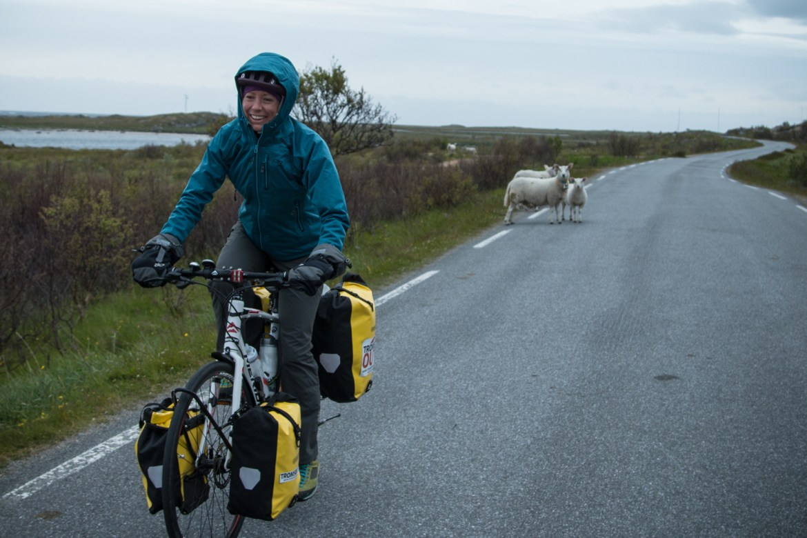 Hilary Oliver draws the attention of local sheep during a bike tour of northern Norway.