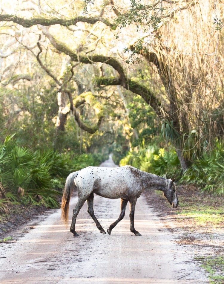 forest woodward photo of wild horse