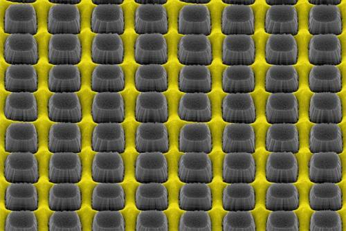 An array of nanopillars etched by thin layer of grate-patterned metal creates a nonreflective surface that could improve electronic device performance. (Source: Daniel Wasserman)