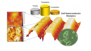 Gallium nitride affects cell behavior (Source: NC State)