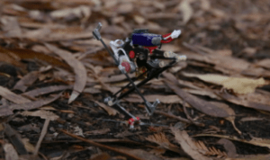 Salto, for saltatorial locomotion on terrain obstacles. (Source: UC Berkeley)
