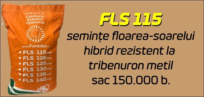 floarea-soarelui fundulea fls 115, compania seminte fundulea