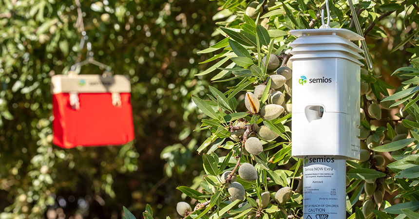 Navel orangeworm pheromone dispenser and automated camera trap in an almond tree