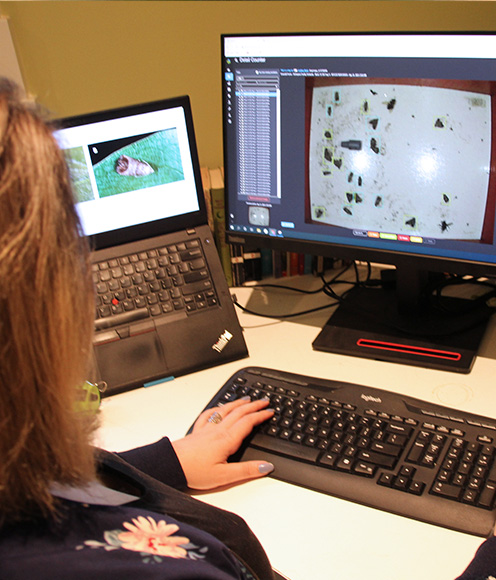 Female Semios employee checking pest counts from a trap image