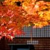 勝尾寺で紅葉狩り!ライトアップの時期とアクセス