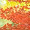 香嵐渓紅葉狩り!見頃の時期とアクセス
