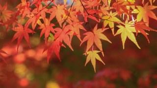 比叡山で紅葉狩り!紅葉まつりの時期とアクセス
