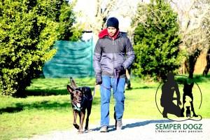 Semper-Dogz---éducateur-canin-nantes-cholet---la-tenue-de-laisse