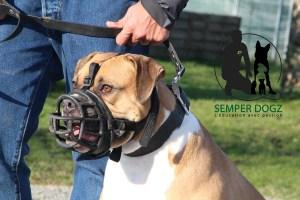 Semper-Dogz---éducateur-canin-nantes-cholet---le-genre-de-regard-dont-il-faut-se-méfier