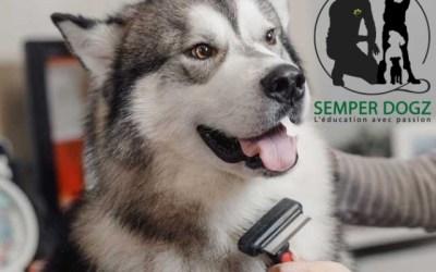 Brosser votre chien